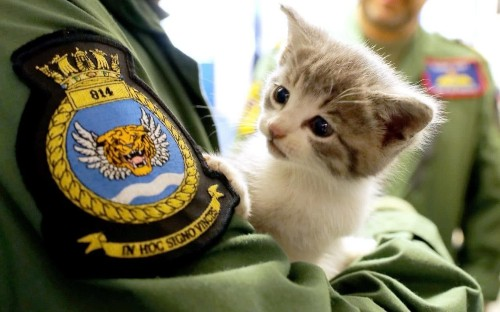Kitten who survived 300 mile journey clung to a car becomes star of military calendar