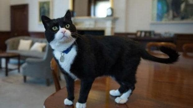 Palmerston the cat arrives for work at the Foreign Office