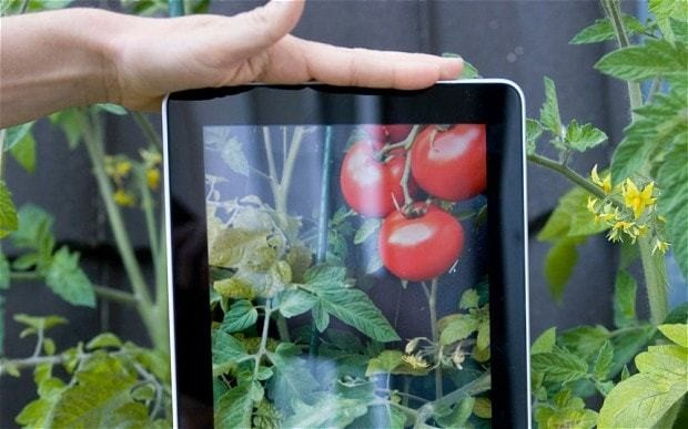 The best gardening apps and websites