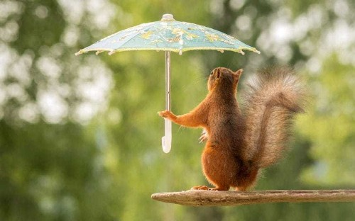 Squirrels doing the strangest things, in pictures