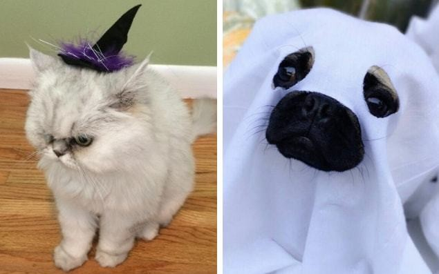 17 of the best scary Halloween costume ideas for pets