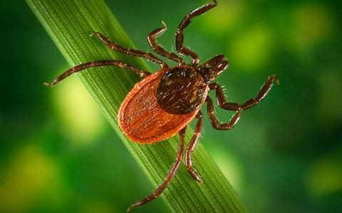 Most people complaining of Lyme disease are actually suffering from chronic fatigue, say experts
