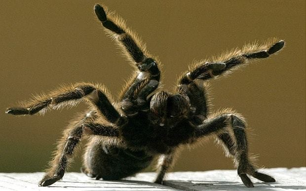 Fear of spiders in our DNA, according to new study