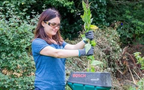 Want a zero-waste garden? Get a shredder