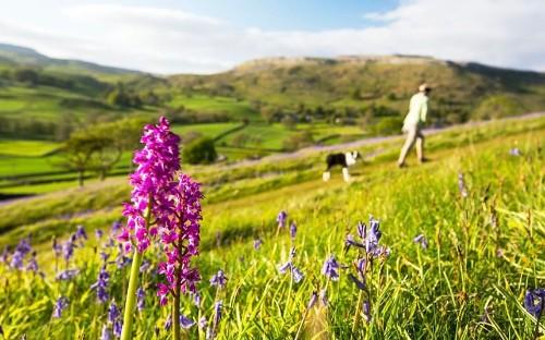 Britain's 25 best spring walks