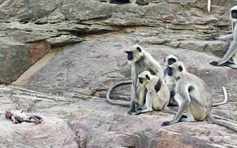 Monkeys mourn robot baby in groundbreaking new BBC show