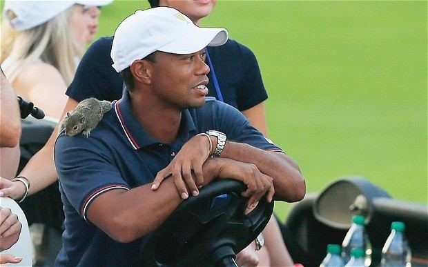 Presidents Cup 2013: Tiger Woods shines as Americans cling to slender lead - and pick up a new squirrel mascot