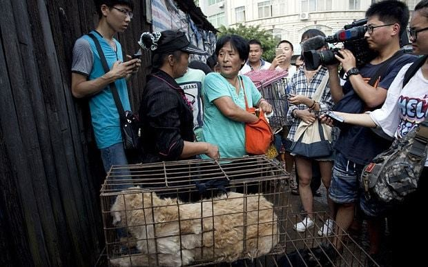 Chinese woman pays £700 to rescue 100 dogs from meat festival