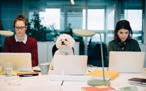 Forget flexitime and egg-freezing – why more employees are demanding 'pawternity' leave