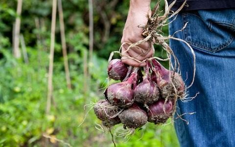 Top 10 vegetables to grow over winter