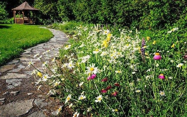 The shortcut to wildflowers in your garden