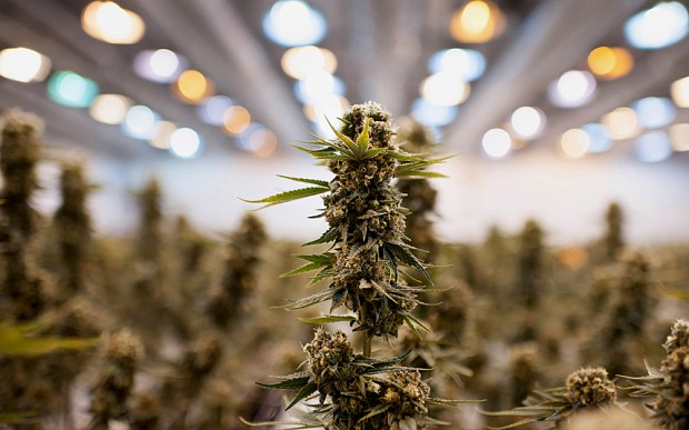 Crossing the green line: The first cannabis company on Wall Street