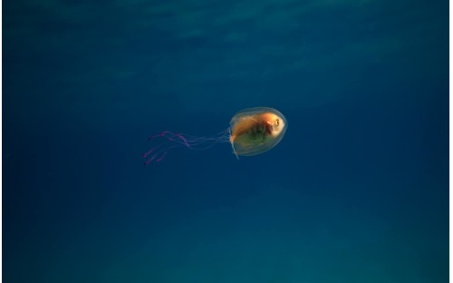 Amazing photos capture 'scared' fish trapped alive inside jellyfish
