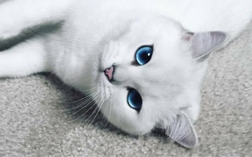 Cat with the most stunningly beautiful eyes becomes internet sensation
