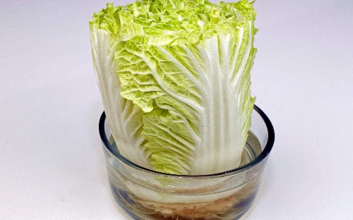 How to grow vegetables from your kitchen scraps