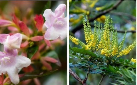 Tips on shrubs for shade, weeds in pots and gift ideas, by garden expert Helen Yemm