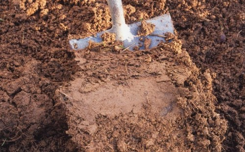How to make the best of a clay soil garden