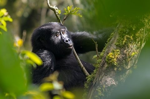 Is this the world's greatest destination for wildlife?