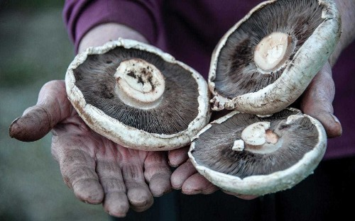 Mushrooms could solve the war on plastic, says Kew Gardens