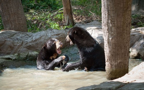 Bears can mimic complex facial expressions to communicate, scientists find