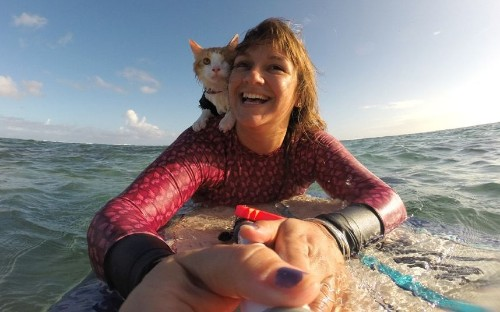 Soggy moggy: Kuli, the one-eyed surfing cat rides Hawaii's waves, in pictures - Telegraph