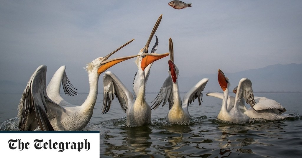 Britain's biggest bird could make comeback in latest rewilding plans