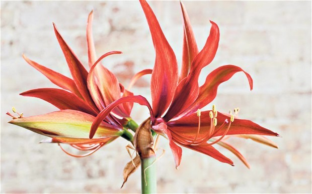 Colourful plants to lift the winter gloom