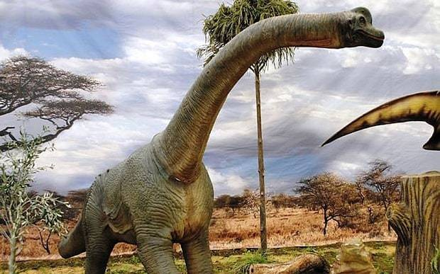 Scientists discover 'new species' of dinosaur