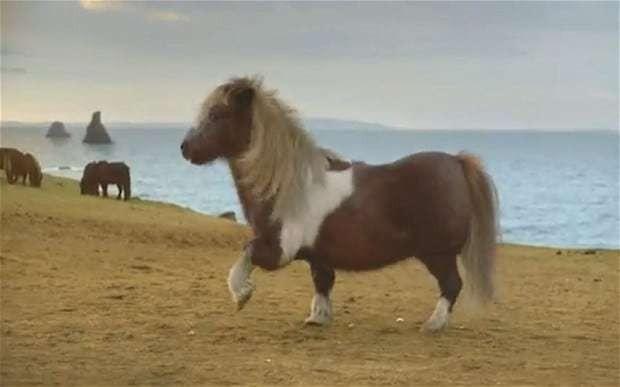 Moonwalking Shetland pony caught in paternity battle