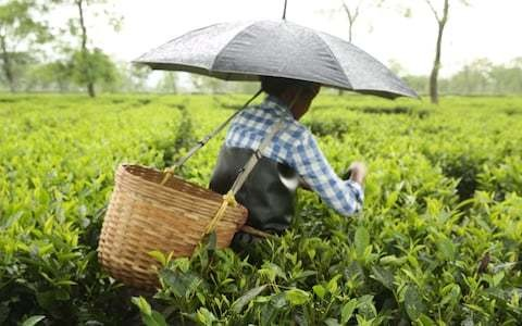 Oxfam criticises British supermarkets over conditions of workers on tea and fruit plantations