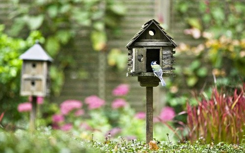 How to make your garden an Airbnb for nesting birds