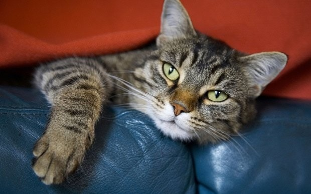 Why owning a cat could lead to blindness