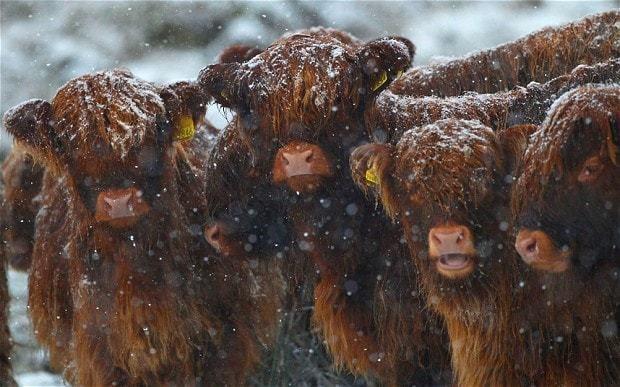 Family farms 'broken up' under SNP land reforms