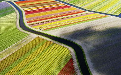 Spectacular striped tulip fields from above, in pictures - Telegraph