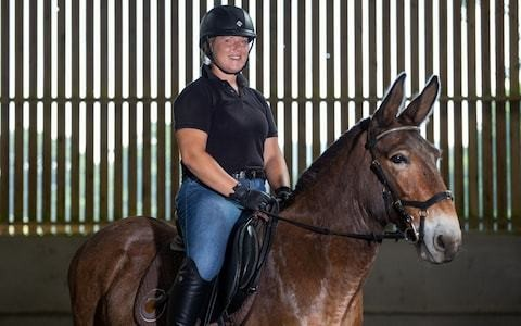 Wallace the mule's bid for dressage stardom dashed amid outrage from horse riders