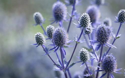 Drought-tolerant and sun-loving plants - Telegraph