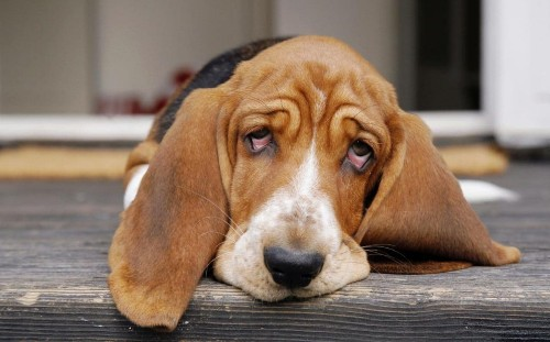 How to spot if your dog is depressed, and what you can do about it
