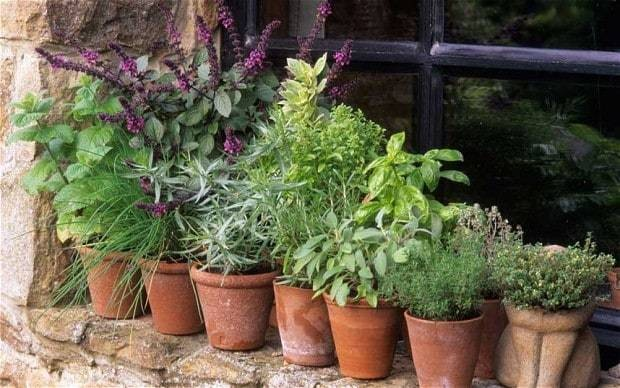 Thorny problems: how can I grow herbs outside the kitchen?