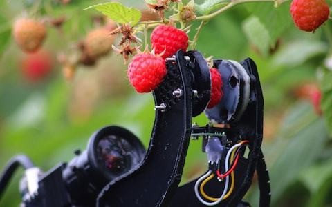 The robot farmers helping to solve Britain's migrant labour shortage