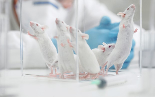 Scientist jailed for faking tests on rats in hope of testing experimental drug on patients