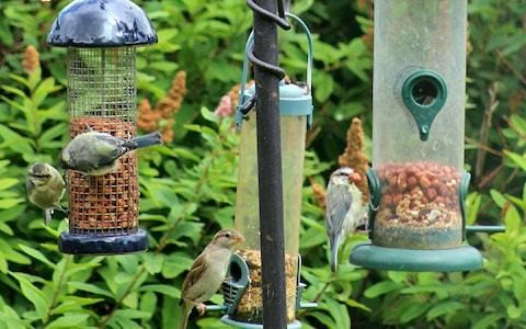 Bird feeding: it may be good for you, but is it good for the birds?