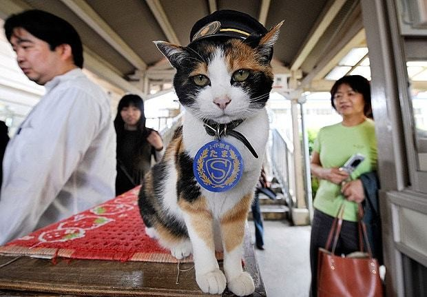 Japan mourns death of Tama, the train stationmaster cat