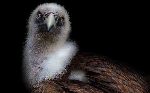 Close up and personal: Pedro Jarque Krebs's haunting animal portraits - Telegraph