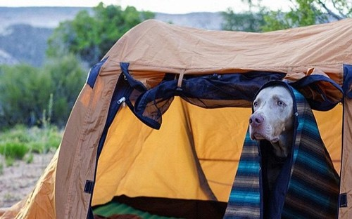 Why dogs are a camper's best friend