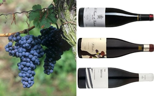 Discover mencia: the Spanish red wine you need to drink