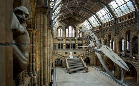 The Natural History Museum's real treasure? The building itself