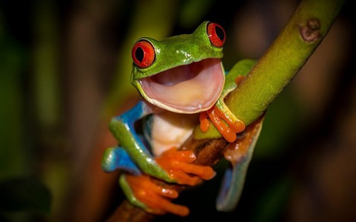 Focus on Nature: Wildlife photography competition - Telegraph