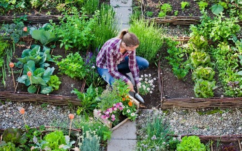 Ken Thompson: companion planting sounds great - but does it work?