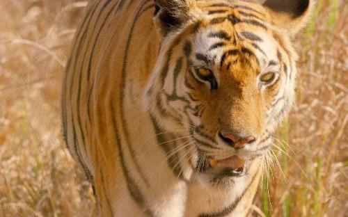 Dynasties, episode 5 review: long may tigers keep burning bright