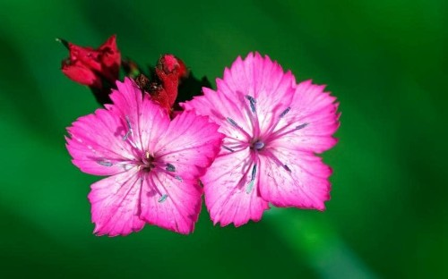 Top 25 plants to grow in summer